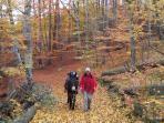 En automne...dans le Parc Naturel des Volcans d' Auvergne