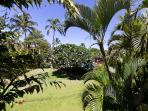 Lanai View