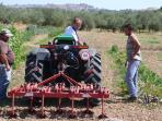 Preparativi per la semina dell'orto