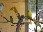 I nostri colorati pappagalli