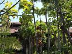 Kihei Resort grounds
