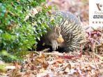Echidna in the gardens