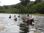 Bathing with horses in the Gardon