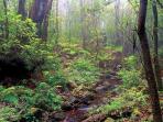 Garajonay National Park.