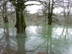 Hayas magestuosas cubiertas por el lago de invierno.
