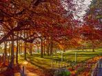 The Donard Park (5 mins walk)