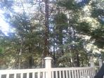 View of trees from the large deck