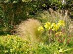 graminées au jardin