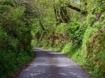 Explore the beautiful lanes nearby