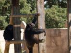 monkey fun at the zoo