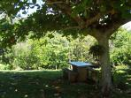 a back yard picnic area under the almond tree