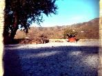 Our Shady Almond Tree - a good place sit in it's shade and look towards Competa