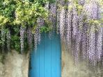 Wisteria covered walls