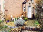 Entrance to Ivy Cottage - small enclosed garden with seating for two