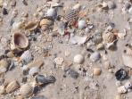 Shelling, anyone?  Play here!  At one with the ocean!
