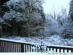 Winter view from veranda into forest