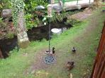 Ducks and birds visit the lodge every day