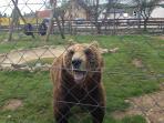 Lovely bears..