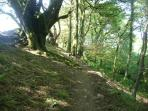 Woodland walk from the Site