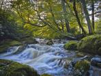 Tollymore Forest….the gateway to the Mournes