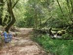 Blaenfforest Woodland Walk