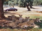 zoosafari and amusement park at Fasano 45km