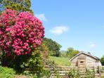 Beautiful Rhododendron bedside the cabin