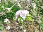Enjoy the apple blossom and Spring at Apple tree cottage!