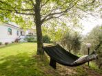 The hammock in the shade of oaks
