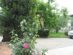Scorcio giardino e parcheggio
