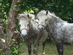 Rare breeds farm on site including Nigel and Woody - miniature Shetland ponies