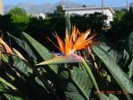 piante tipiche della macchia mediterranea