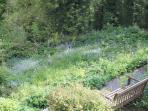 Maytime - the wild garden lawn