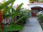 Apartment, Tropical Garden & Courtyard surrounded by high concrete walls for privacy & security