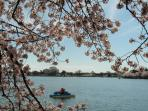 Paddle boating during National Cherry Blossom Festival 2014