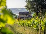vineyard of our Casale