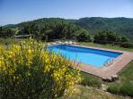 The pool at the beginning of May with ginestre