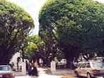 Shoppers under the umbrella trees in Humacao's town square. Good supermarkets and restaurants abound