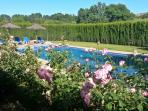 Spring time at Finca Retama Vacation Homes. Our large pool with roses
