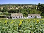 Charming Andalucian reantals near to the beautiful town of Ronda suitable for families or couples