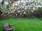 Back yard - apple tree in full blossom - Follow the Apple Pie Trail, Blue Mountain it's famous