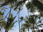 Palm trees and sunshine............ahhhhh!