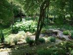 Quelques points d'eau parsèment le jardin