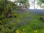 North Lodge Summerhouse in the bluebells