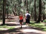 Palaau Park in Kalae