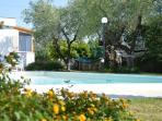 Panoramica piscina da ulivo