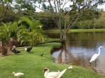 Duck feeding pond