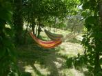 Hammocks among the cherry trees