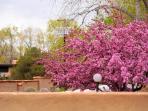 Beautiful foliage near Lavender