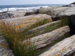Explore the rocky coast of Maine.